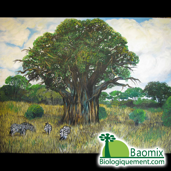 The Mythical Baobab