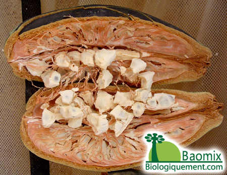 Baobab Anti-Aging Pores And Skin Care Important Fatty Acids And Also Antioxidants