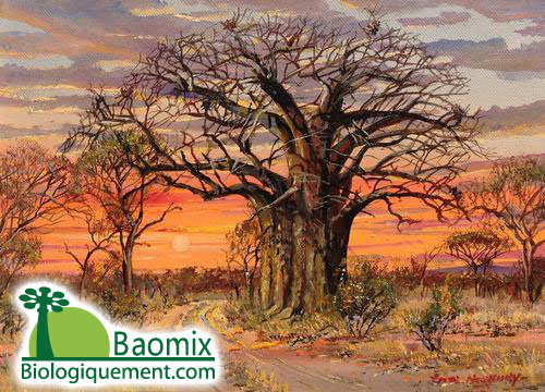 Baomix production and Baobab fruit pulp health benefit