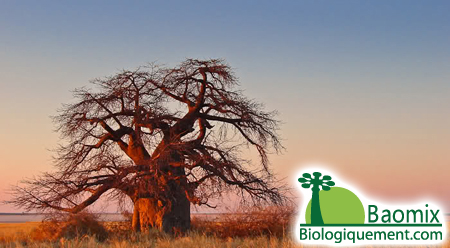 Baobab is a magical fruit!