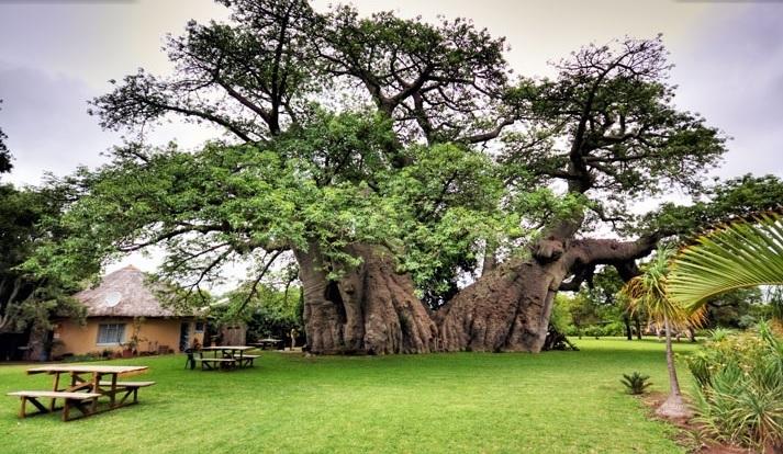 baobab biologiquement baomix. Black Bedroom Furniture Sets. Home Design Ideas